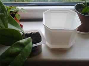 Хойя - Hoya: фото, условия выращивания, уход и размножение