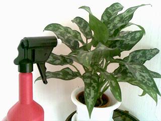 Комнатные растения потребляющие много влаги из воздуха