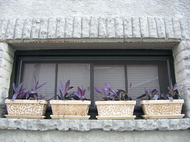 Сеткреазия на окне