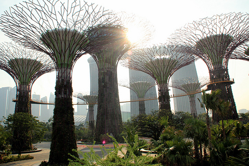 Supertrees. Gardens by the Bay, Singapore