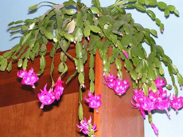 удачный день для пересадки комнатных цветов