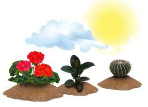 Индивидуальные потребности растений в свете