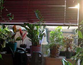 После пересадки растения