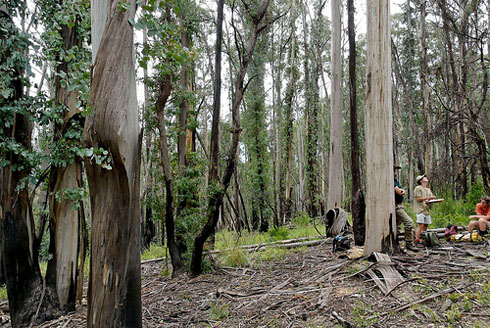 Eucalypt tall forest after fire